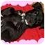 Photo 4 - Shar Pei Mix Puppy for adoption in salisbury, North Carolina - Dakota