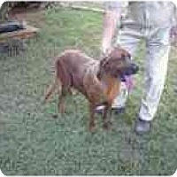 Adopt A Pet :: Zeena - Carrollton, GA