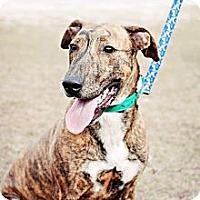 Adopt A Pet :: Axel - Crawfordville, FL