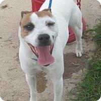 Adopt A Pet :: Palmer in Houston - Houston, TX