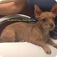 Adopt A Pet :: FANCY - Torrance, CA