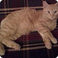 Adopt A Pet :: Cubby - St. Louis, MO