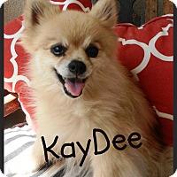 Adopt A Pet :: KayDee - Escondido, CA