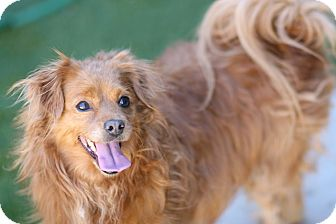 Spaniel (Unknown Type) Mix Dog for adoption in Coronado, California - Danza