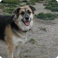 Adopt A Pet :: maria - Saskatoon, SK