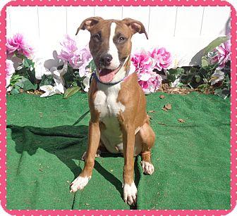 Boxer Mix Dog for adoption in Marietta, Georgia - MELLIE