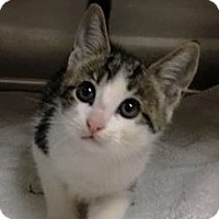 Adopt A Pet :: Dak - Chattanooga, TN