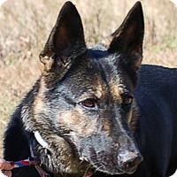 Adopt A Pet :: Akira AD 02-04-17 - Preston, CT