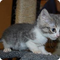 Adopt A Pet :: Hansel - Whittier, CA