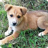 Adopt A Pet :: I'M ADOPTED Elliott - Oswego, IL