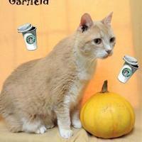 Adopt A Pet :: Garfield - Chattanooga, TN