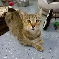 Adopt A Pet :: Mary (crosseye) - Brooksville, FL