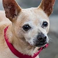 Adopt A Pet :: Nico - Miami, FL