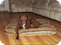Labrador Retriever Mix Dog for adoption in Manahawkin, New Jersey - Sunny