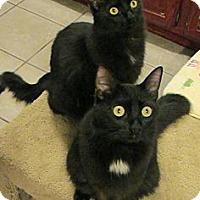 Adopt A Pet :: Ashton - Long Beach, CA
