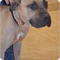 Adopt A Pet :: Reece - Phoenix, AZ