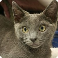 Adopt A Pet :: Nikita - Canoga Park, CA