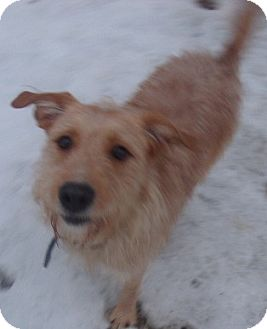 Terrier (Unknown Type, Medium) Mix Dog for adoption in Coudersport, Pennsylvania - SCOOBY DOO