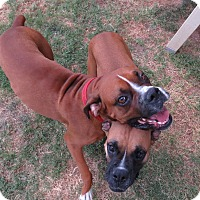 Adopt A Pet :: Jessica & Oggie - Scottsdale, AZ