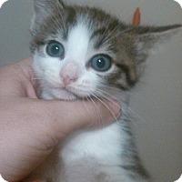 Adopt A Pet :: Clark Kent - Lawrenceville, GA