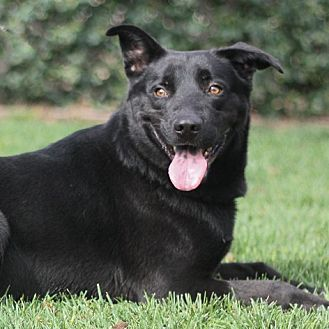 Labrador Retriever Mix Dog for adoption in Stockton, California - Cooper