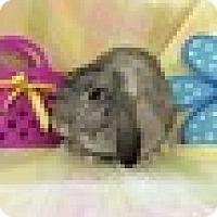 Adopt A Pet :: Graylene - Paramount, CA