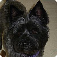Adopt A Pet :: Pepper - Omaha, NE