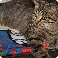 Adopt A Pet :: Sweet William (Neutered) - Marietta, OH