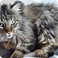 Adopt A Pet :: Casey - Washington, VA