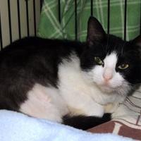 Adopt A Pet :: Nina - Westville, IN