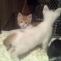 Adopt A Pet :: Flash - Whitney, TX