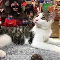 Adopt A Pet :: Boyse (5-Set Kit 5 041117) - McDonough, GA