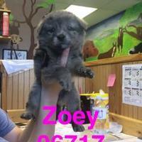 Adopt A Pet :: ZOEY - Kiln, MS