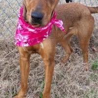 Adopt A Pet :: CLARA - Cleveland, MS