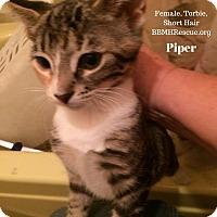 Adopt A Pet :: Piper - Temecula, CA