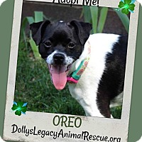 Adopt A Pet :: OREO - Lincoln, NE