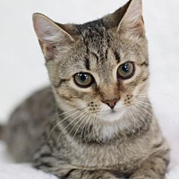 Adopt A Pet :: Lacey S - Raleigh, NC