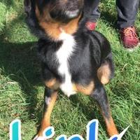 Adopt A Pet :: Link - Huntsville, TX
