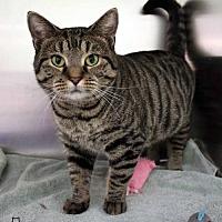 Adopt A Pet :: Sheba - Paris, ME