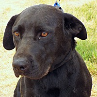 Adopt A Pet :: Onyx - Grants Pass, OR