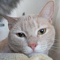 Adopt A Pet :: Waffles - Redwood City, CA