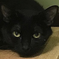 Adopt A Pet :: Bethsheba - Auburn, CA