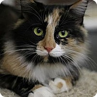 Adopt A Pet :: Autumn - Alexandria, VA