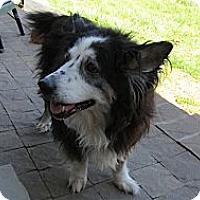 Adopt A Pet :: Wolfie - Wapwallopen, PA