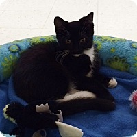 Adopt A Pet :: Cunningham - Byron Center, MI
