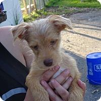 Adopt A Pet :: Dallas - Delaware, OH