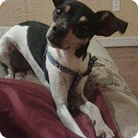 Adopt A Pet :: Lillian (Lilly) - Shawnee Mission, KS
