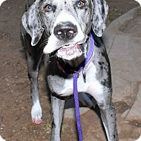 Adopt A Pet :: Piper - Phoenix, AZ