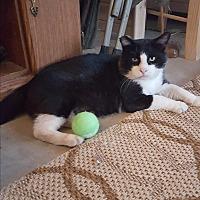 Adopt A Pet :: Earl - Monrovia, CA