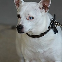 Adopt A Pet :: Noella - Lafayette, IN